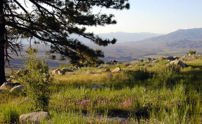 lowery conservation easement california