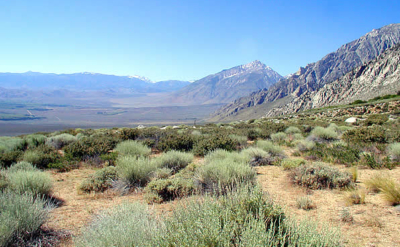mcAfee conservation easement california