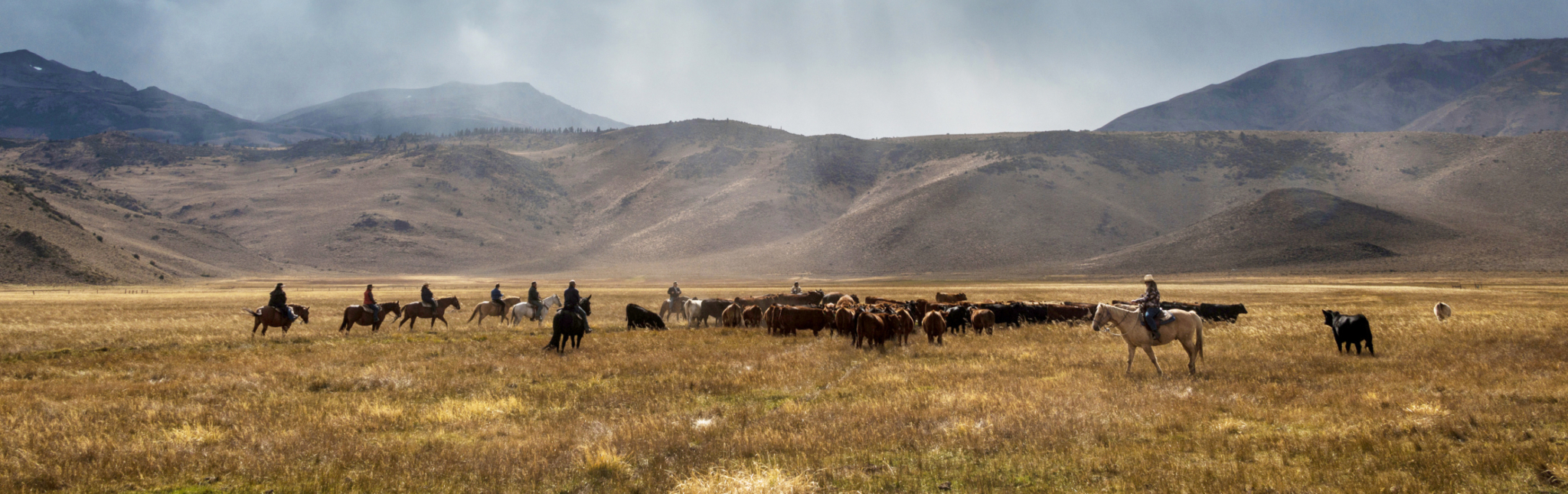 hunewill ranch with cowboys and cattle