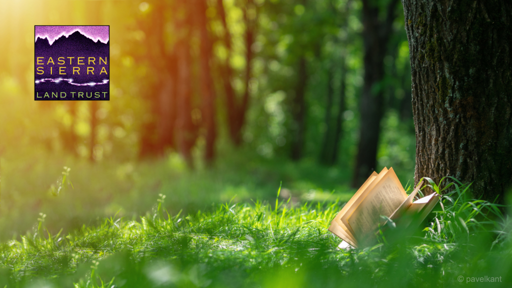 A book resting in grass in a very green forested area